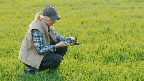 Thumbnail for A Farmer Is Studying the Roots of Wheat Germ