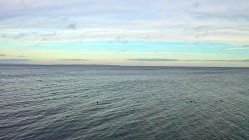 Pelagic Parts of the Sea