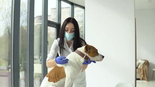 Vet Make Injection To a Dog in Clinic