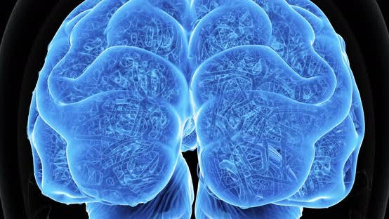 Thumbnail for 3D menschliches Gehirn