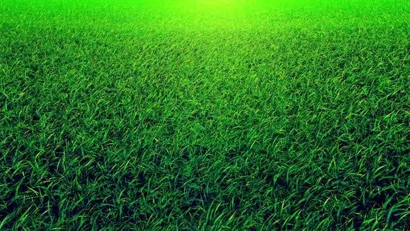 Thumbnail for Flying On Grass 01 4K