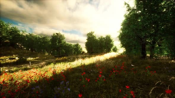 Thumbnail for Heavy Rain Clouds Over the Field at the Sunset