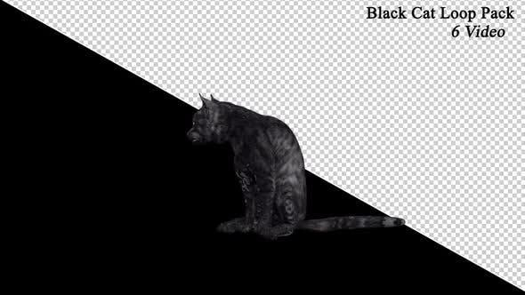 Schwarze Katze Front Pack