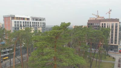 Pines And New Buildings