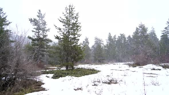 Thumbnail for Heavy Snowfall in Mixed Forest