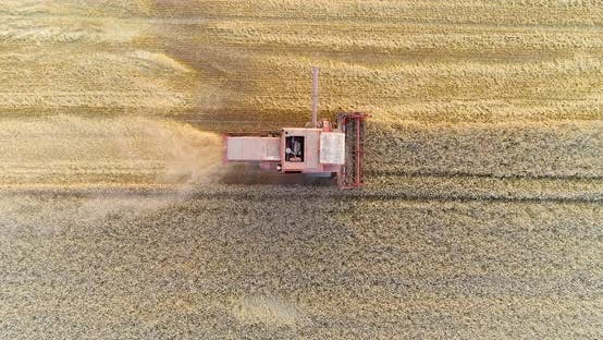 Thumbnail for Harvesting. Combine Harvester Harvesting Wheat