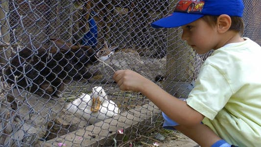 Thumbnail for Kid Feeding Ducks