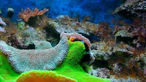 Sea life with big clownfish