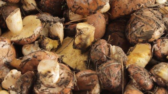 Thumbnail for Pilze in einem Haufen