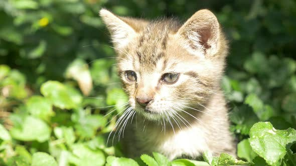 Thumbnail for Kitten in the grass 3840X2160 UHD footage - Little cat in the garden 4K UHD footage