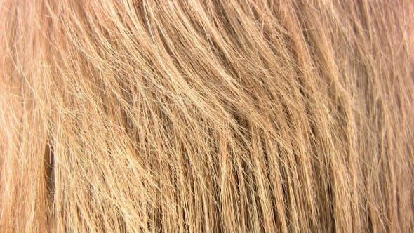 Thumbnail for Healthy Hair