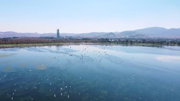 Thumbnail for Flying Birds Over The Lake