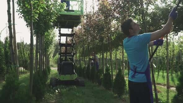 Thumbnail for People Work in Garden Using Elevator