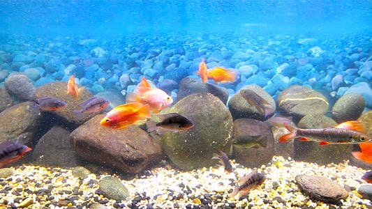 Thumbnail for Coral Fish 14