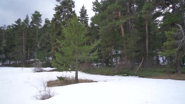 Thumbnail for Natural Mixed Forest Floor After Winter