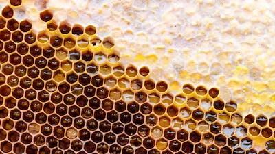 Honey Wax Frame with Sealed Honey Close Up Slow Motion