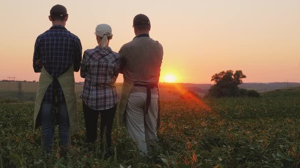 Thumbnail for A Family of Farmers After Work Day Admire the Sunset Over Their Field