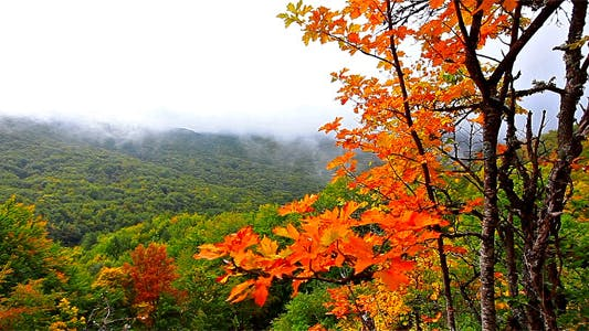 Thumbnail for Autumn Landscape In Mountains 4