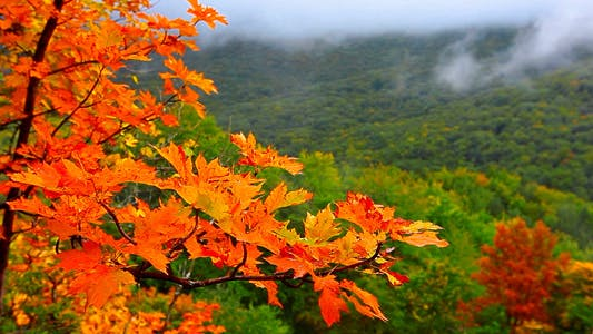 Thumbnail for Autumn Landscape In Mountains 5