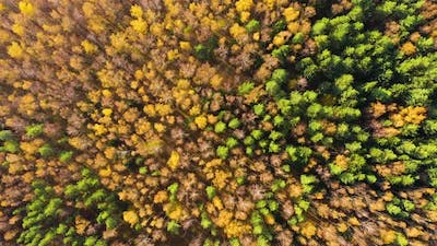 Colourful Autumn Colours in Forest Form Above Captured with a Drone