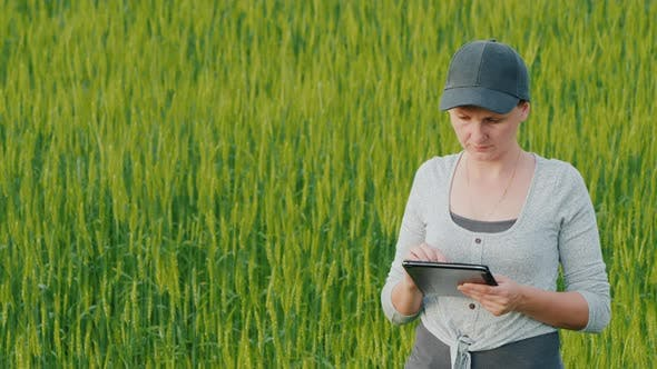 Cover Image for Woman Farmer with Tablet in Hand Stands on Green Wheat Field