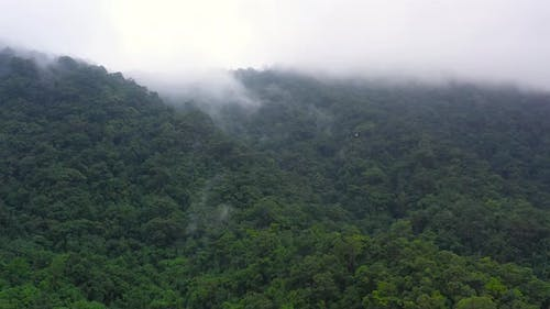 Evergreen Forest in the Tropics