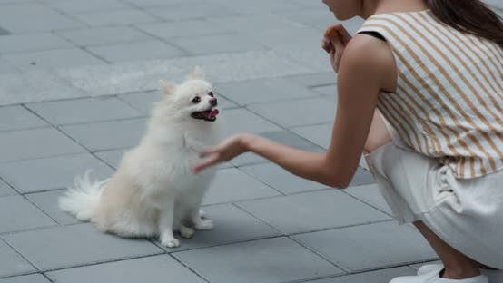 Thumbnail for Woman play with her Pomeranian dog at outdoor street