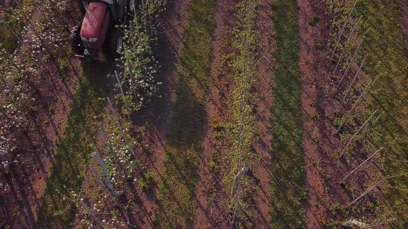 Thumbnail for a Tractor Sprays a Blooming Apple Orchard