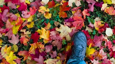 Autumn Leaves Under Your Feet