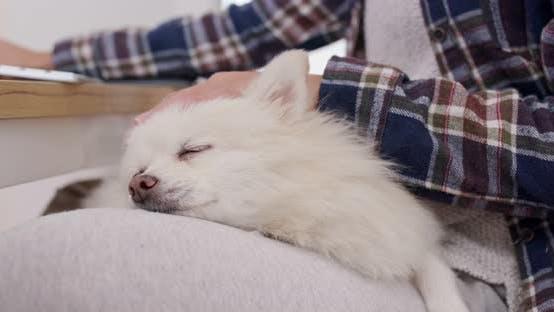 Thumbnail for Woman cuddling her pomeranian dog