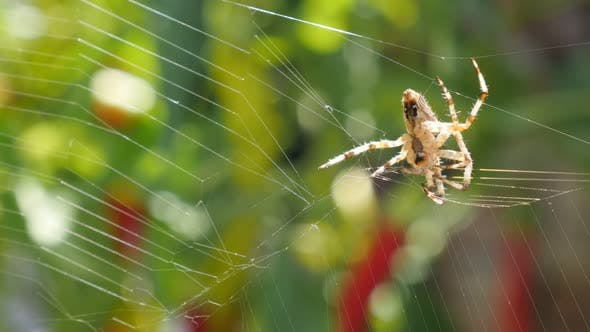 Thumbnail for Web made by a spider and green shallow DOF background 4K 2160p 30fps UltraHD video - Cobweb and spid