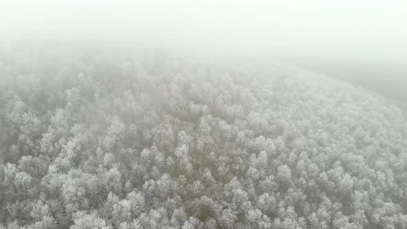Aerial Of Ice Frozen Forest