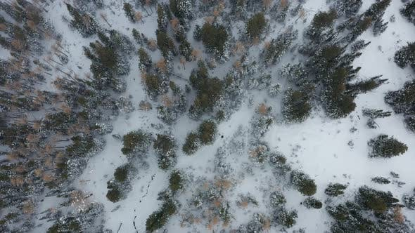 Thumbnail for Canadian Winter Aerial in The Snow