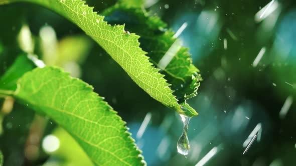 Irrigation of Plants