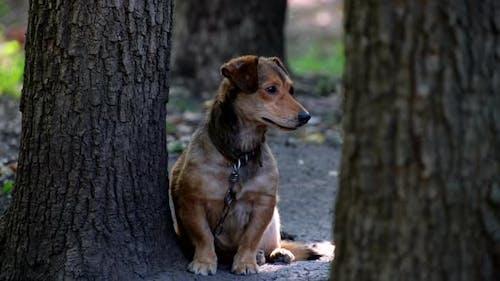 Yard old dog on a chain. Natural rural scene. Mongrel dog