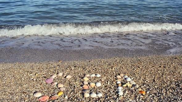 Thumbnail for Shells 6