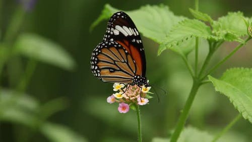 Butterfly And Flower Macro