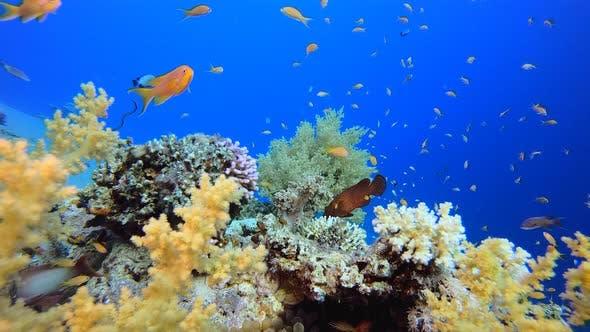 Tropical Seascape Underwater