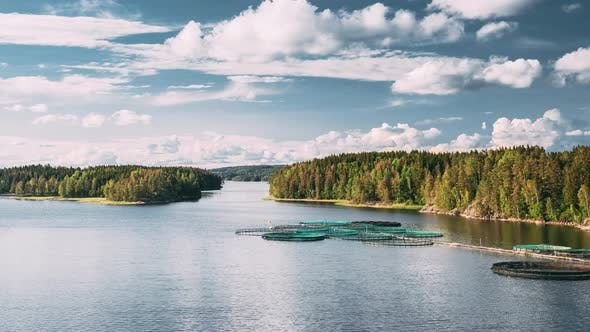Fisheries Fish Farm In Summer Lake Or River In Beautiful Summer Sunny Day