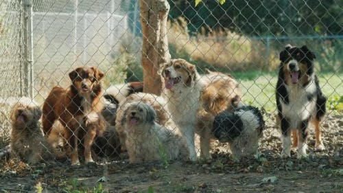 A Group of Dogs Outside the Fence. Dogs in a Shelter or an Animal Nursery