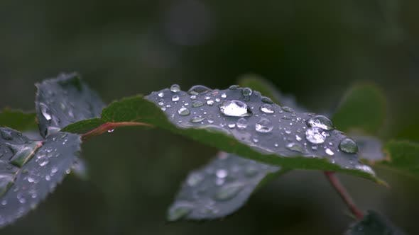 Green Leaf with Water Drops on Nature Background