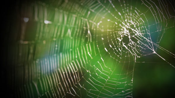 Forest Web