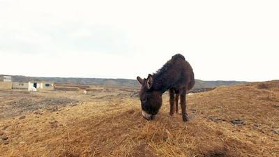 Donkey Eating