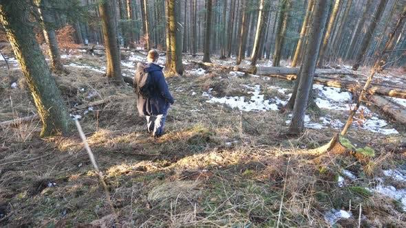 Thumbnail for Vue arrière du touriste masculin avec sac à dos marche vers le bas sur la pente de la forêt de pins. Jeune Backpacker Goes