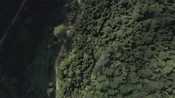 Thumbnail for Trabzon City Forest Mountains And Roads Top View