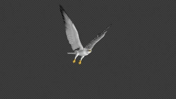 Thumbnail for Arctic Gyrfalcon - 4K Flying Loop - Front Angle