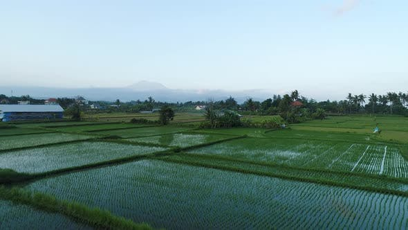 Thumbnail for Flight Over Rice Terraces in the Evening