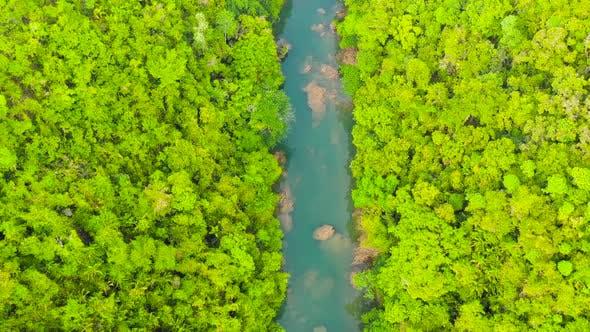 Loboc River in the Jungle