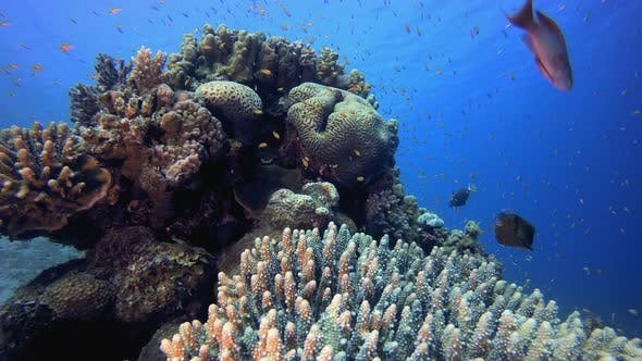 Cover Image for Marine Underwater Tropical Fish Garden