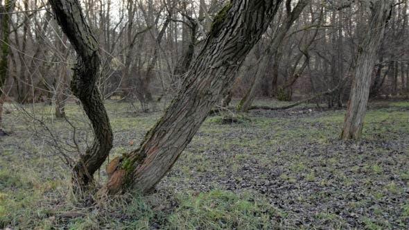 Thumbnail for Epic Forest (Slow Slider Shot)